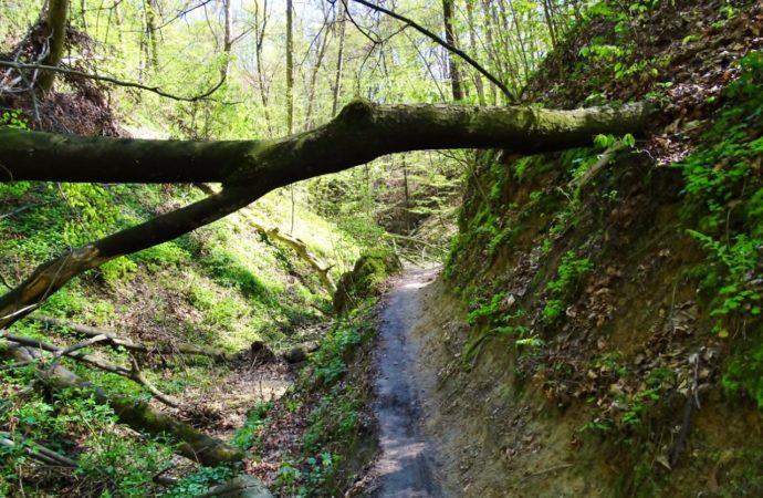 Wycieczka biegowo rowerowa Rzeszów – Lasy Hucisko – Sokołów Małopolski – Turza