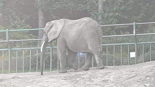 Zoo w Gdańsku