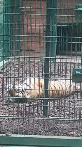 Lew Zoo Gdańsk